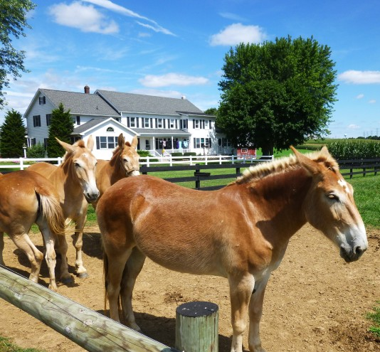 hamish-chevaux